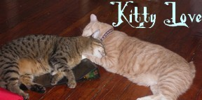 Kitty_love