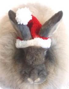 Santa_bunny_1